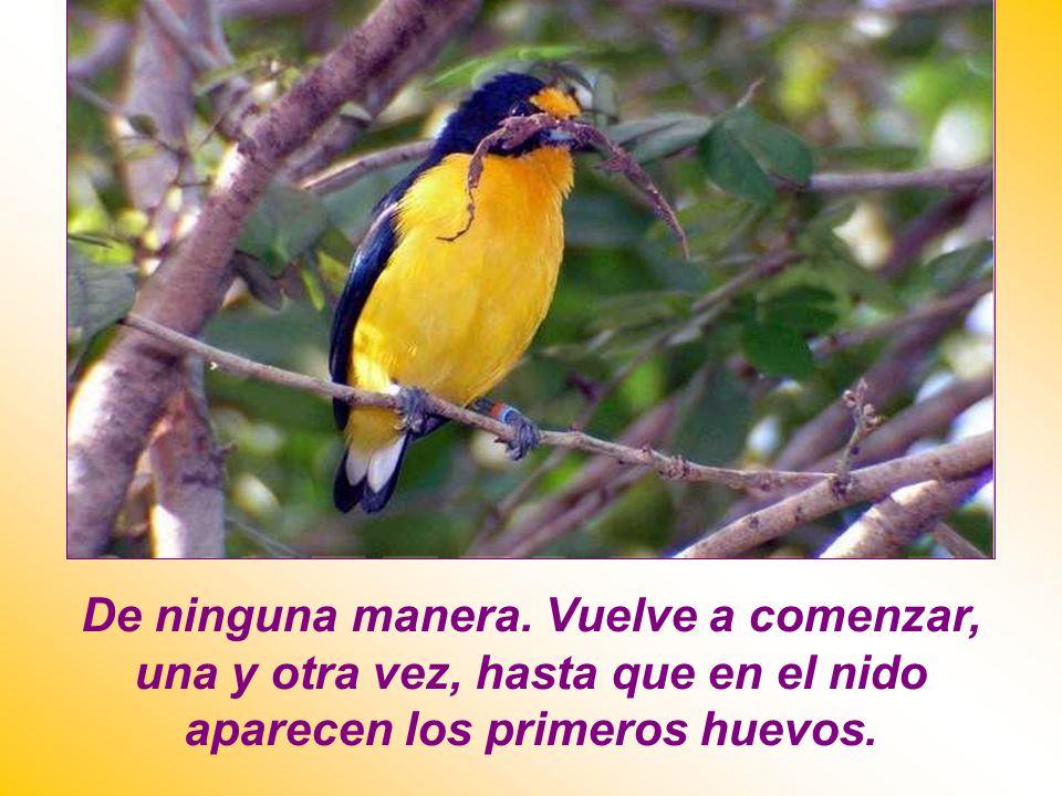 ¿Qué hace el pájaro? ¿Se ahuyenta? ¿Se paraliza? ¿Abandona la tarea?