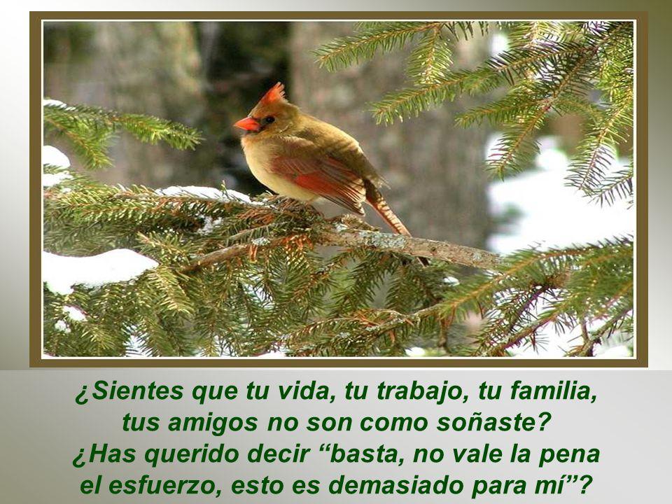 Duele comenzar otra vez desde cero... Pero aun así el pájaro jamás enmudece ni retrocede, sigue cantando y construyendo, construyendo y cantando...