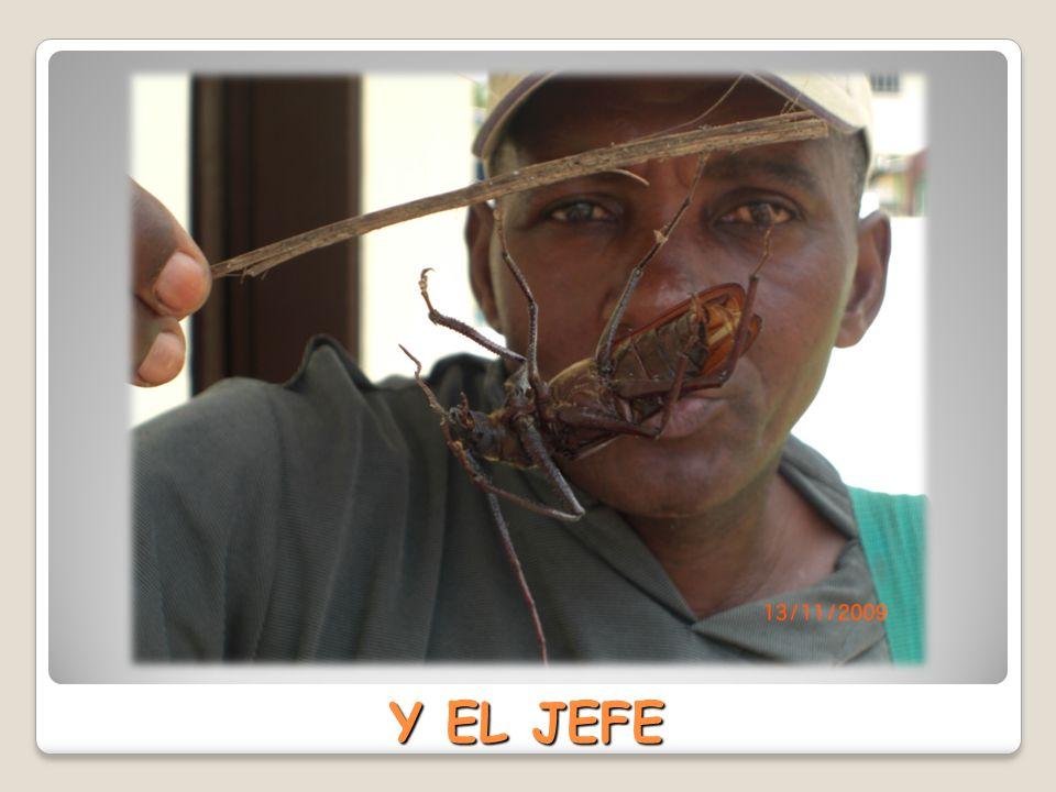 Y EL JEFE