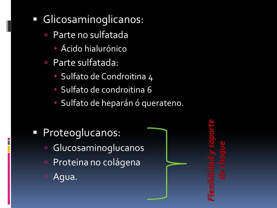Glicosaminoglicanos: Parte no sulfatada Ácido hialurónico Parte sulfatada: Sulfato de Condroitina 4 Sulfato de condroitina 6 Sulfato de heparán ó quer
