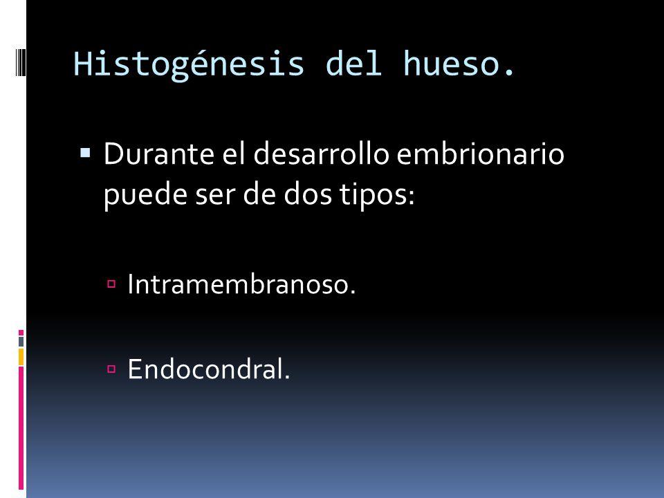 Histogénesis del hueso. Durante el desarrollo embrionario puede ser de dos tipos: Intramembranoso. Endocondral.