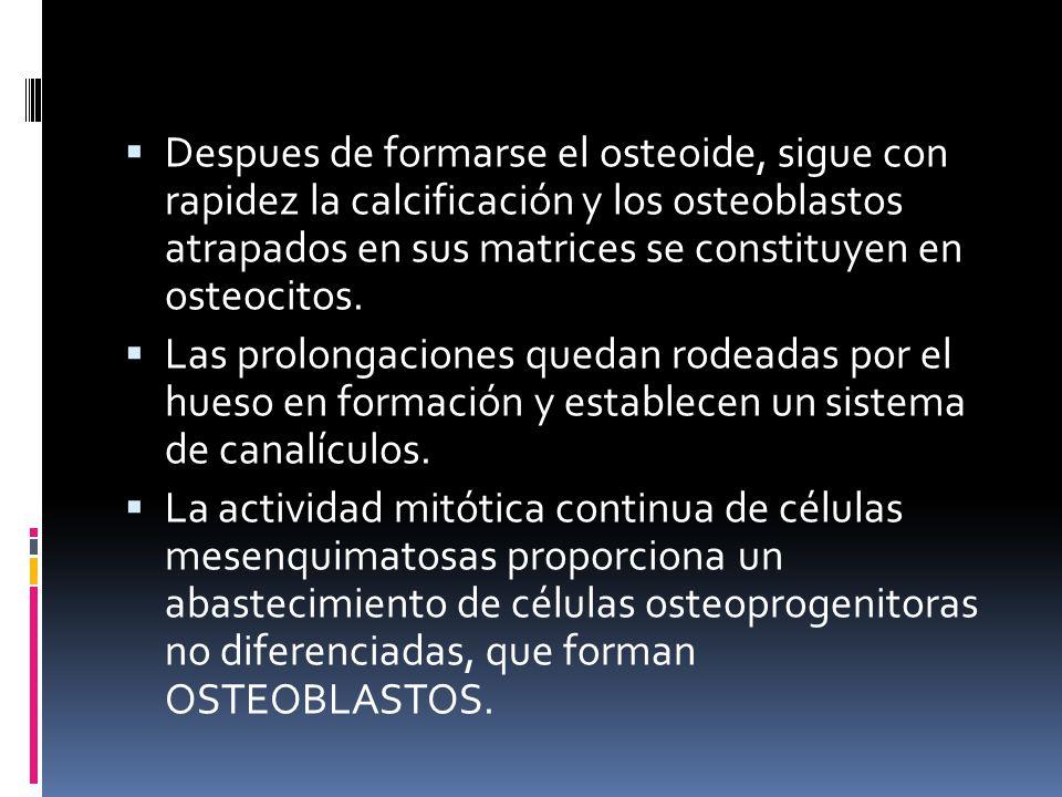 Despues de formarse el osteoide, sigue con rapidez la calcificación y los osteoblastos atrapados en sus matrices se constituyen en osteocitos. Las pro
