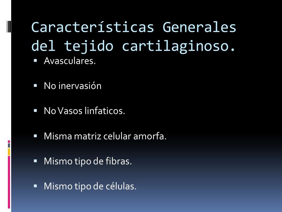 Características Generales del tejido cartilaginoso. Avasculares. No inervasión No Vasos linfaticos. Misma matriz celular amorfa. Mismo tipo de fibras.