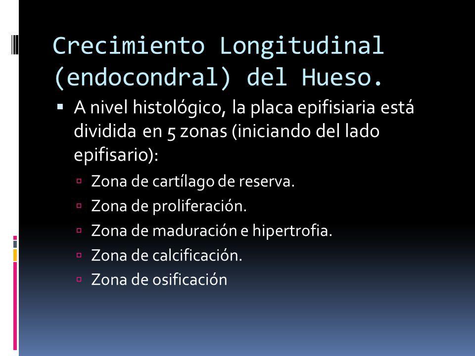 Crecimiento Longitudinal (endocondral) del Hueso. A nivel histológico, la placa epifisiaria está dividida en 5 zonas (iniciando del lado epifisario):
