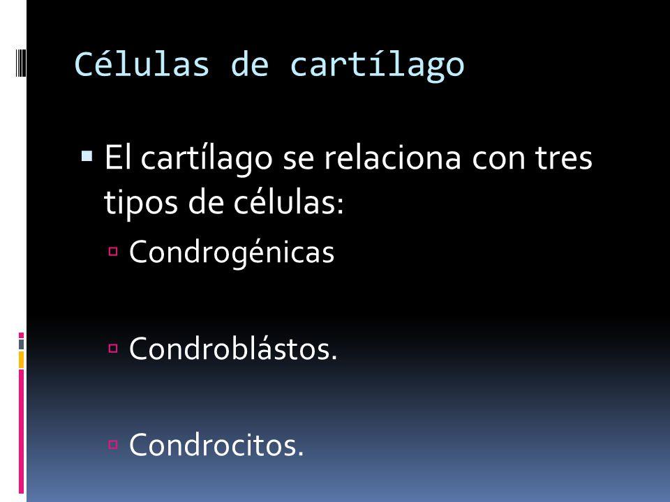 Células de cartílago El cartílago se relaciona con tres tipos de células: Condrogénicas Condroblástos. Condrocitos.