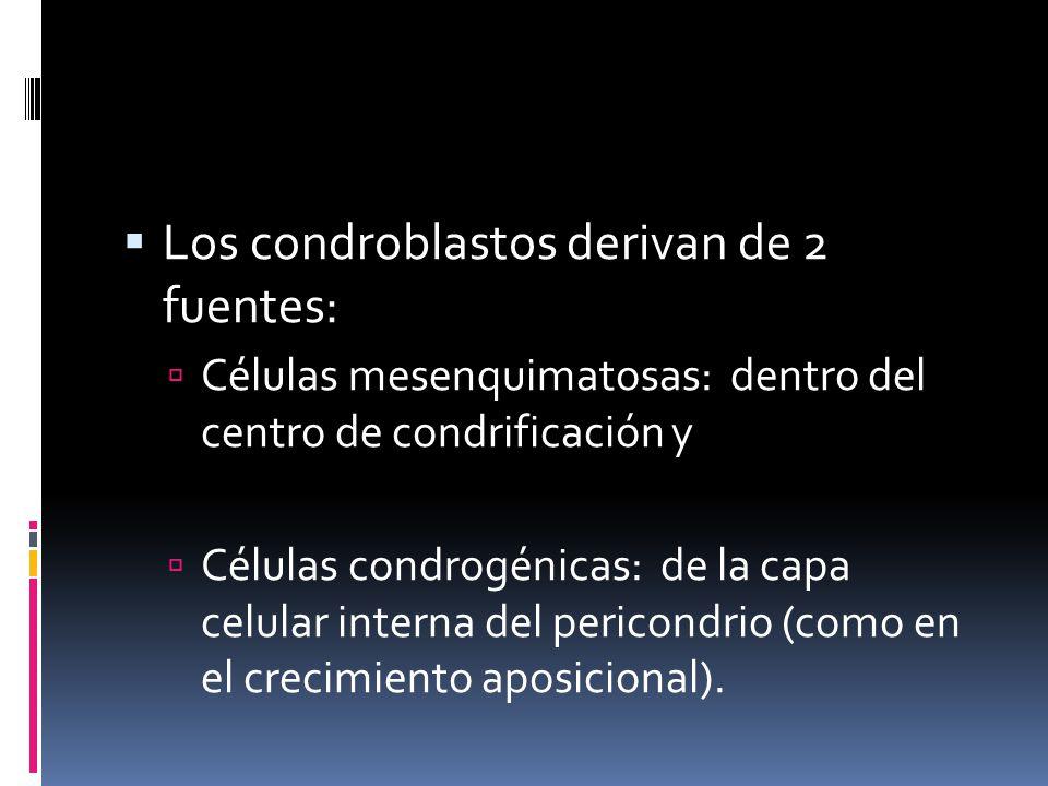 Los condroblastos derivan de 2 fuentes: Células mesenquimatosas: dentro del centro de condrificación y Células condrogénicas: de la capa celular inter