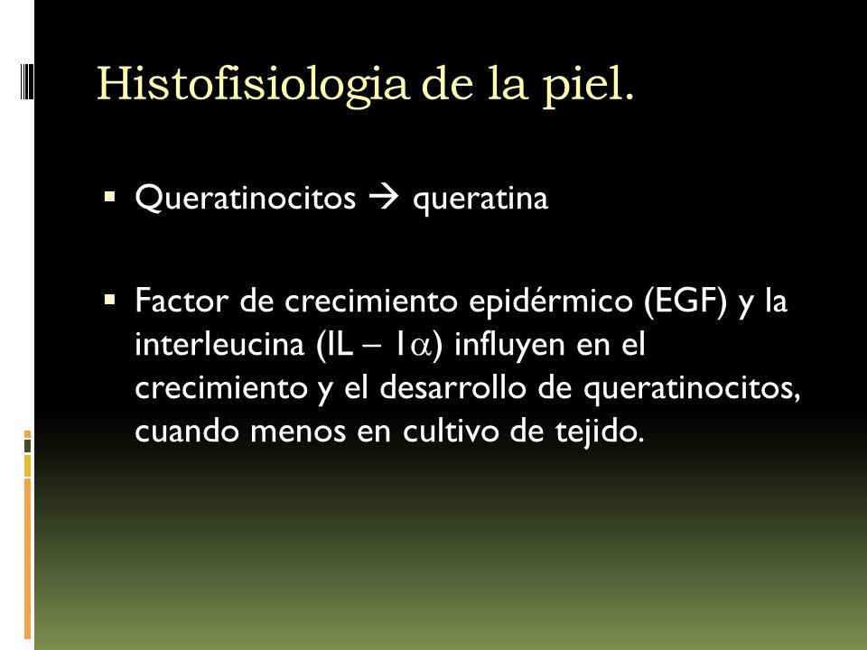 Histofisiologia de la piel. Queratinocitos queratina Factor de crecimiento epidérmico (EGF) y la interleucina (IL – 1 ) influyen en el crecimiento y e