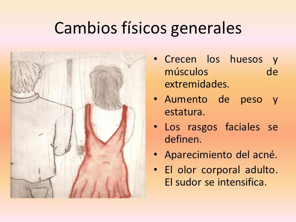 Cambios físicos generales Crecen los huesos y músculos de extremidades. Aumento de peso y estatura. Los rasgos faciales se definen. Aparecimiento del