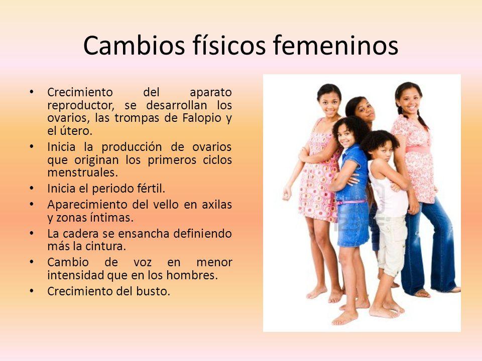 Cambios físicos femeninos Crecimiento del aparato reproductor, se desarrollan los ovarios, las trompas de Falopio y el útero. Inicia la producción de