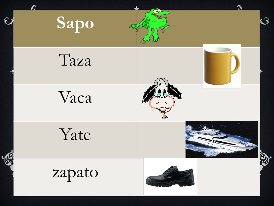 Sapo Taza Vaca Yate zapato