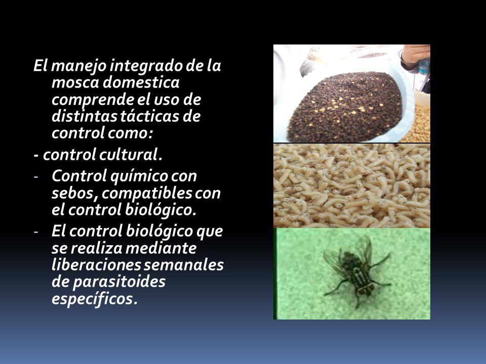 Manejo integrado de mosca doméstica El manejo integrado de la mosca domestica comprende el uso de distintas tácticas de control como: - control cultural.