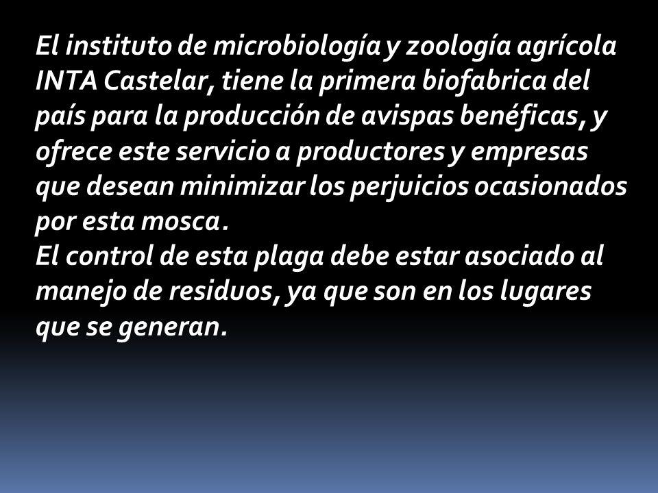 El instituto de microbiología y zoología agrícola INTA Castelar, tiene la primera biofabrica del país para la producción de avispas benéficas, y ofrece este servicio a productores y empresas que desean minimizar los perjuicios ocasionados por esta mosca.