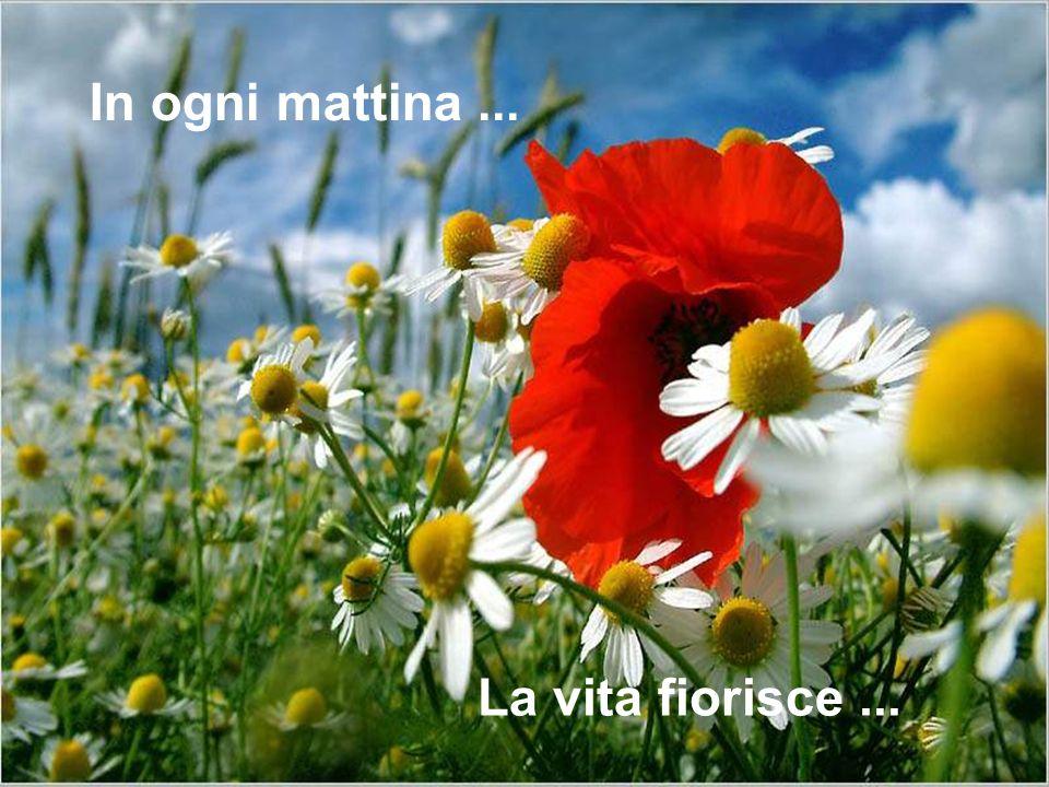 La vita fiorisce... In ogni mattina...