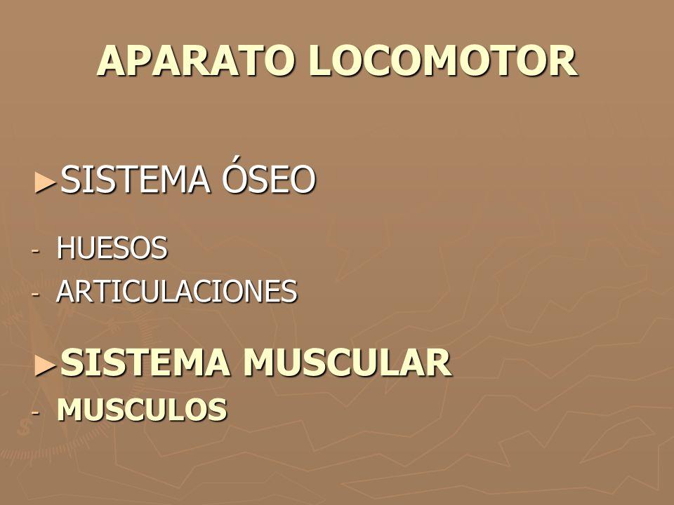 APARATO LOCOMOTOR ► SISTEMA ÓSEO - HUESOS - ARTICULACIONES ► SISTEMA MUSCULAR - MUSCULOS