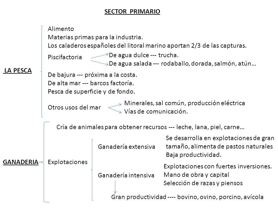 LA PESCA SECTOR PRIMARIO Alimento Materias primas para la industria.