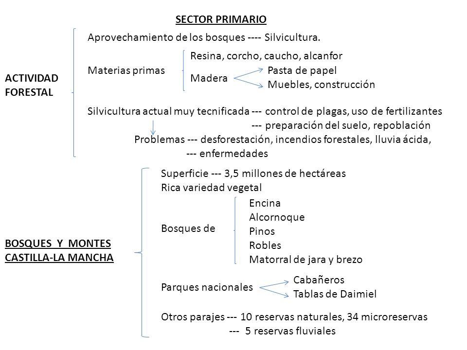 SECTOR PRIMARIO ACTIVIDAD FORESTAL Aprovechamiento de los bosques ---- Silvicultura.