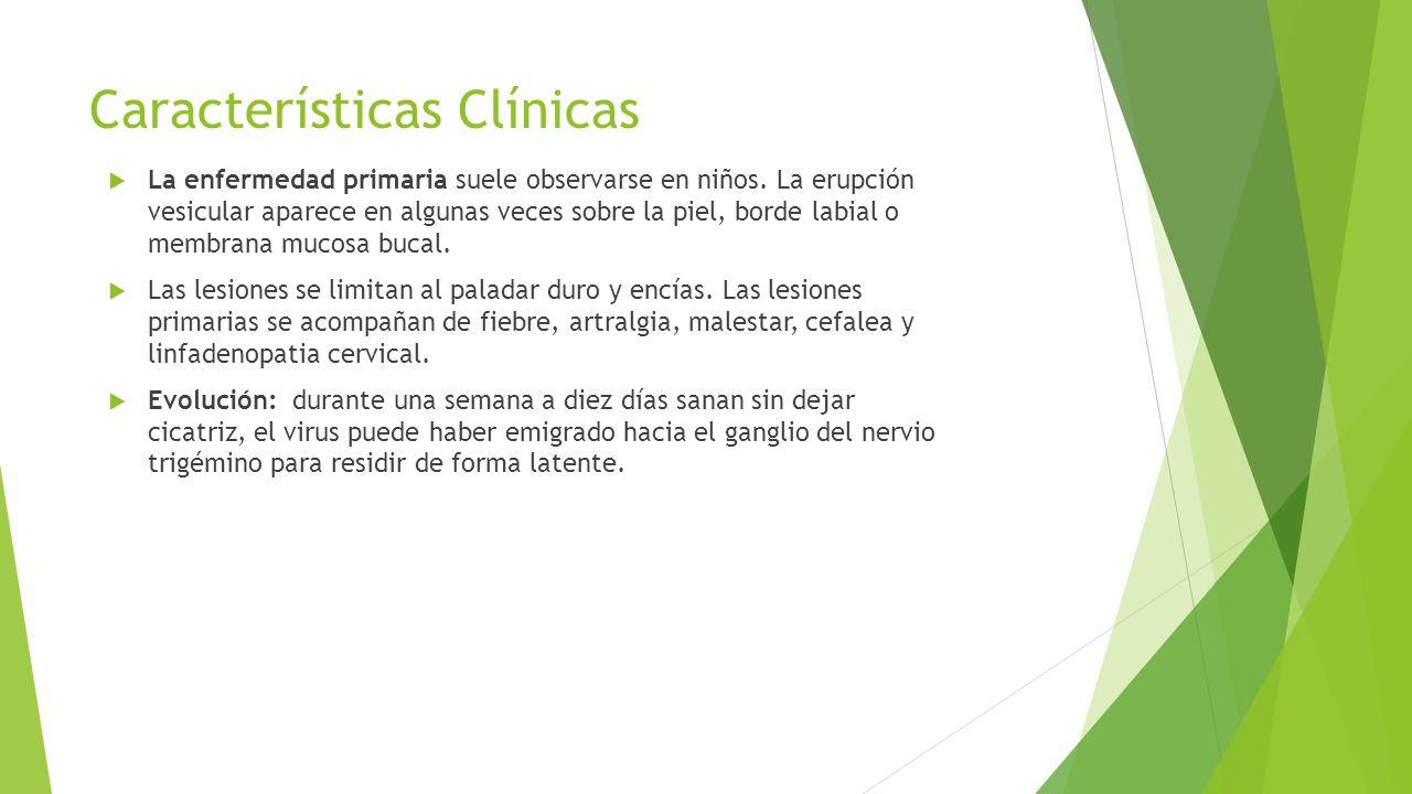 Características Clínicas  La enfermedad primaria suele observarse en niños. La erupción vesicular aparece en algunas veces sobre la piel, borde labia