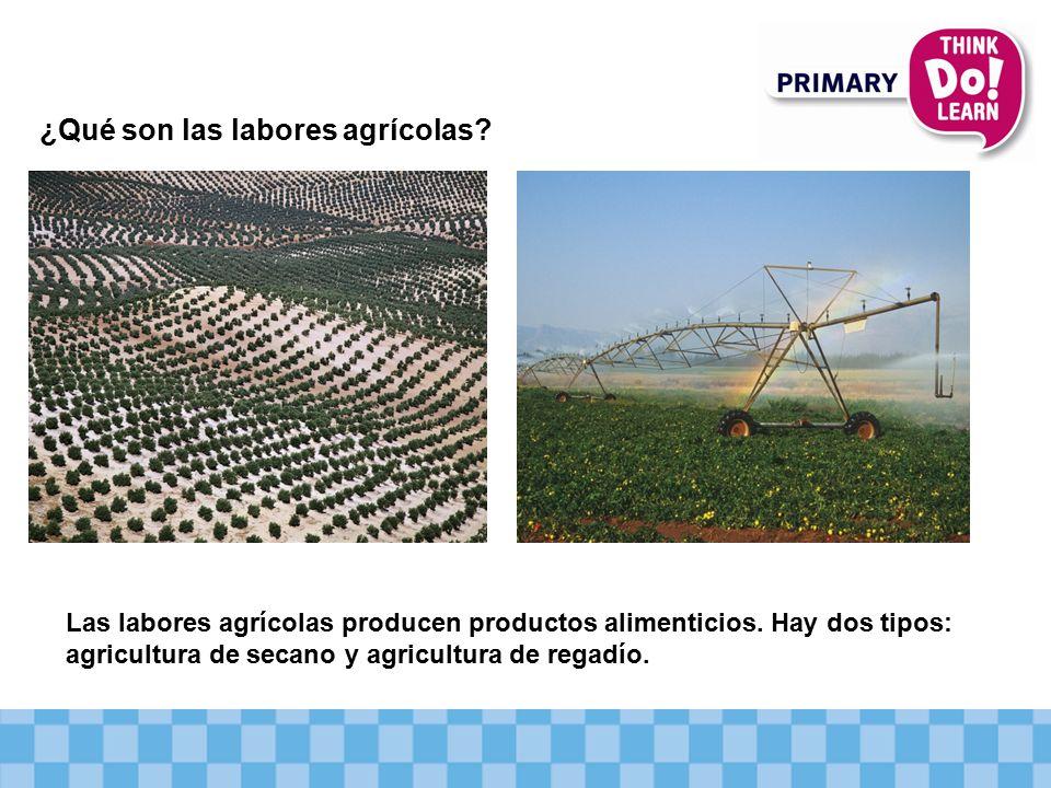 ¿Qué son las labores agrícolas.Las labores agrícolas producen productos alimenticios.