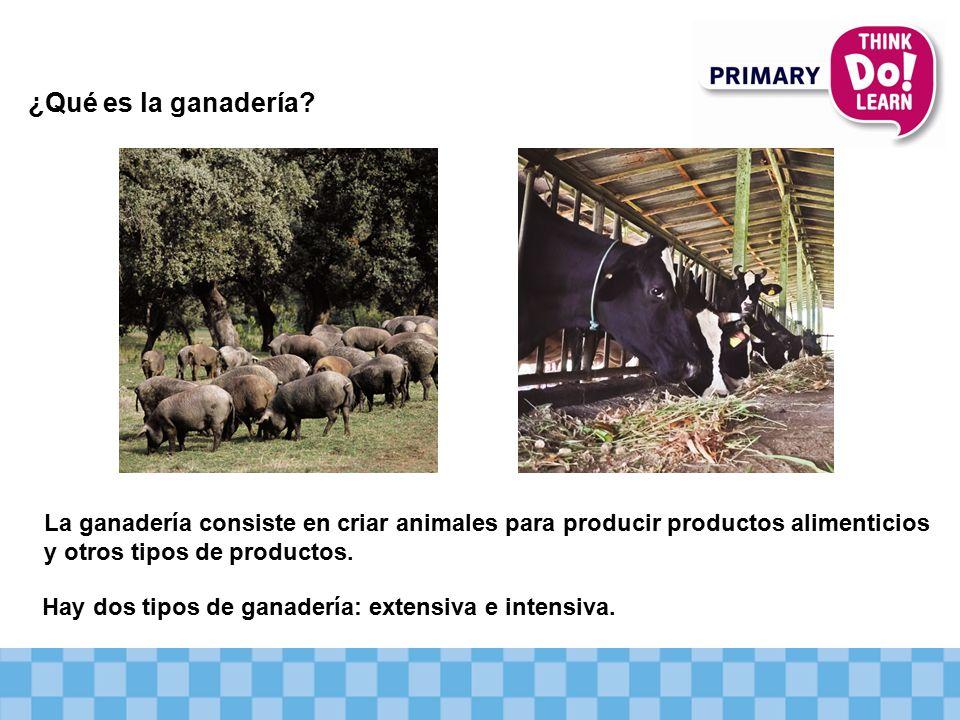 La ganadería consiste en criar animales para producir productos alimenticios y otros tipos de productos.