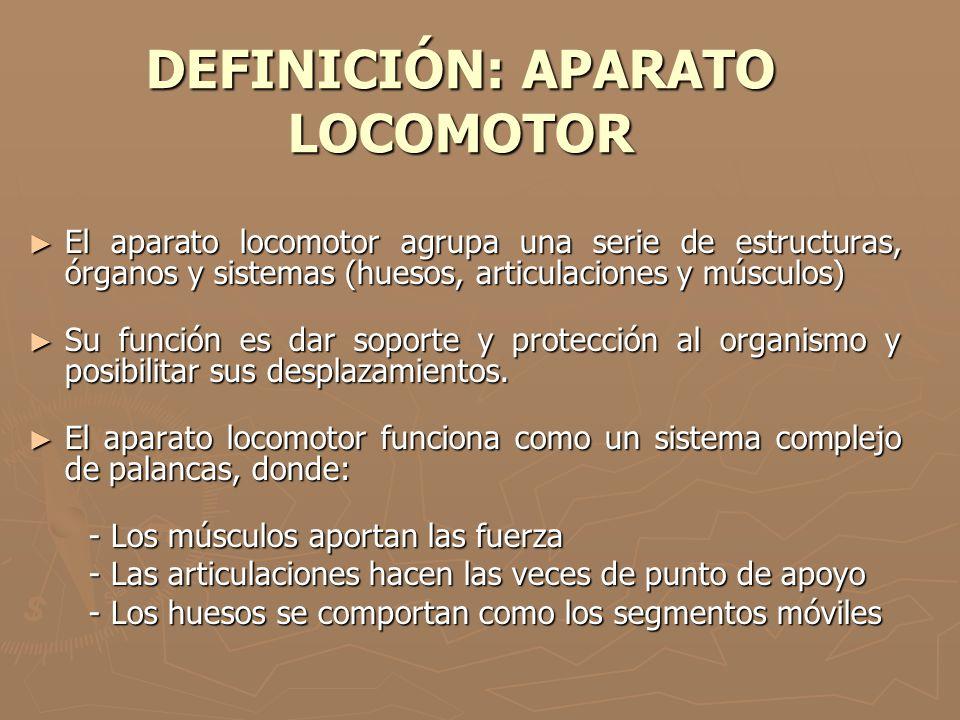 DEFINICIÓN: APARATO LOCOMOTOR ► El aparato locomotor agrupa una serie de estructuras, órganos y sistemas (huesos, articulaciones y músculos) ► Su func