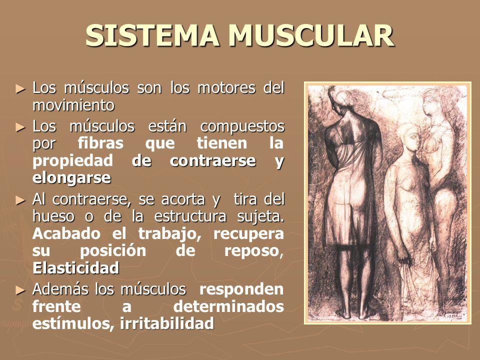 SISTEMA MUSCULAR ► Los músculos son los motores del movimiento ► Los músculos están compuestos por de contraerse y elongarse ► Los músculos están comp