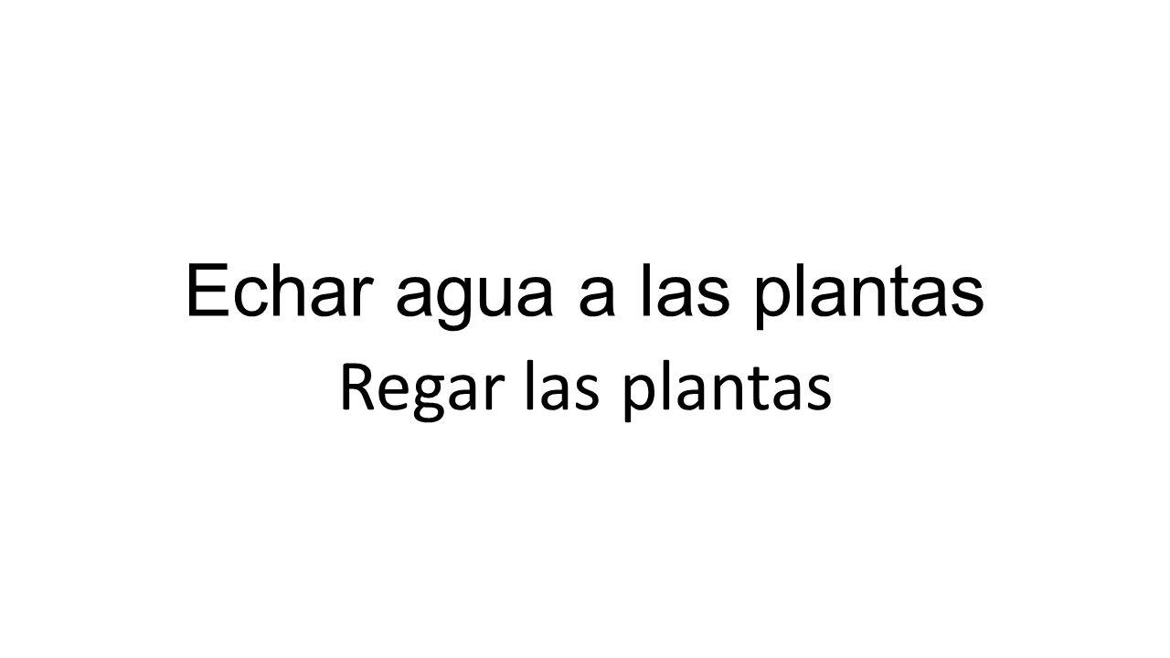 Echar agua a las plantas Regar las plantas