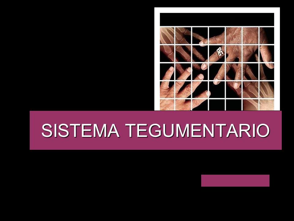 El sistema tegumentario está formado por la piel, pelo, uñas y glándulas anexas.