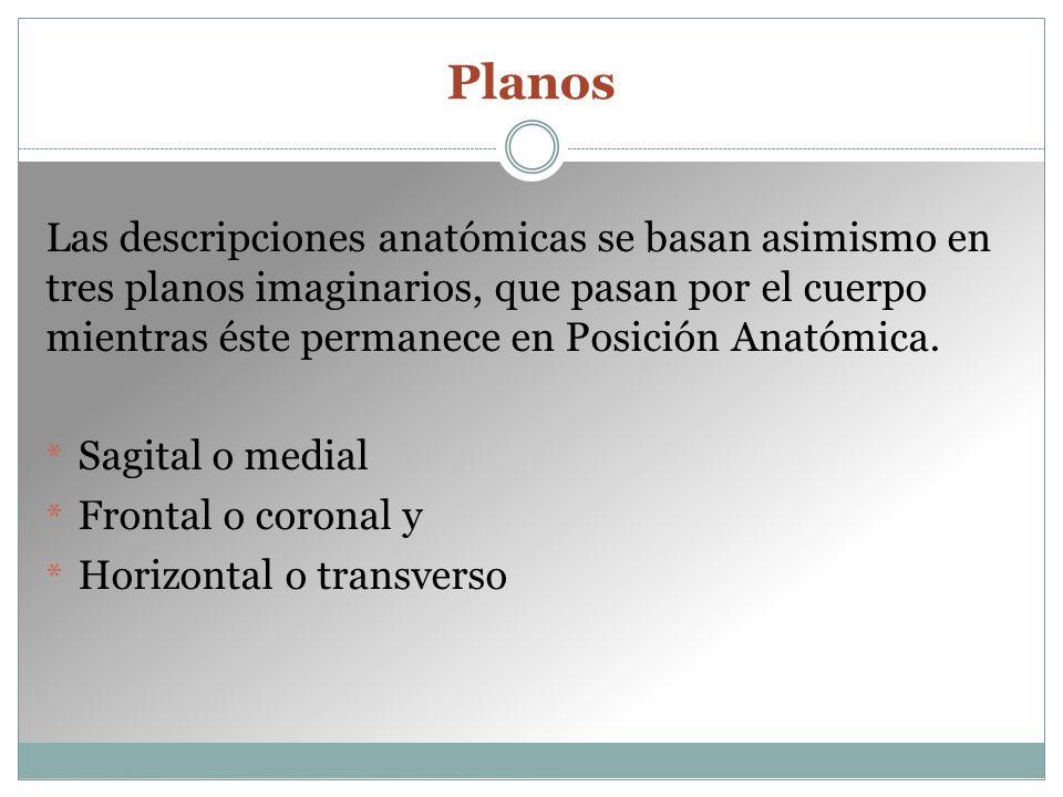 Planos Las descripciones anatómicas se basan asimismo en tres planos imaginarios, que pasan por el cuerpo mientras éste permanece en Posición Anatómica.