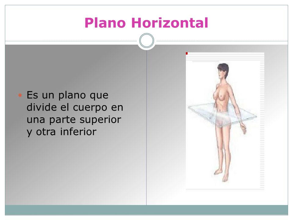 Plano Horizontal Es un plano que divide el cuerpo en una parte superior y otra inferior
