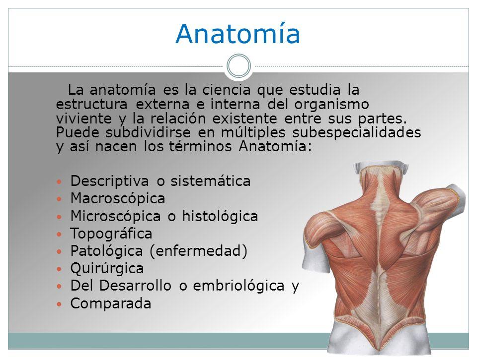Anatomía La anatomía es la ciencia que estudia la estructura externa e interna del organismo viviente y la relación existente entre sus partes.