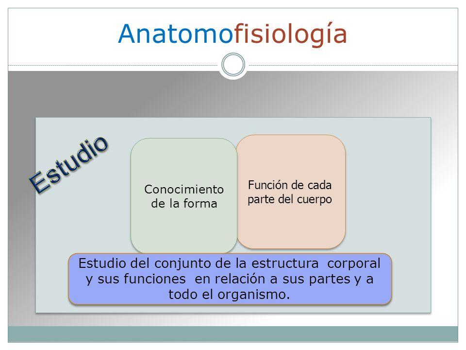 Anatomofisiología Función de cada parte del cuerpo Conocimiento de la forma Estudio del conjunto de la estructura corporal y sus funciones en relación a sus partes y a todo el organismo.