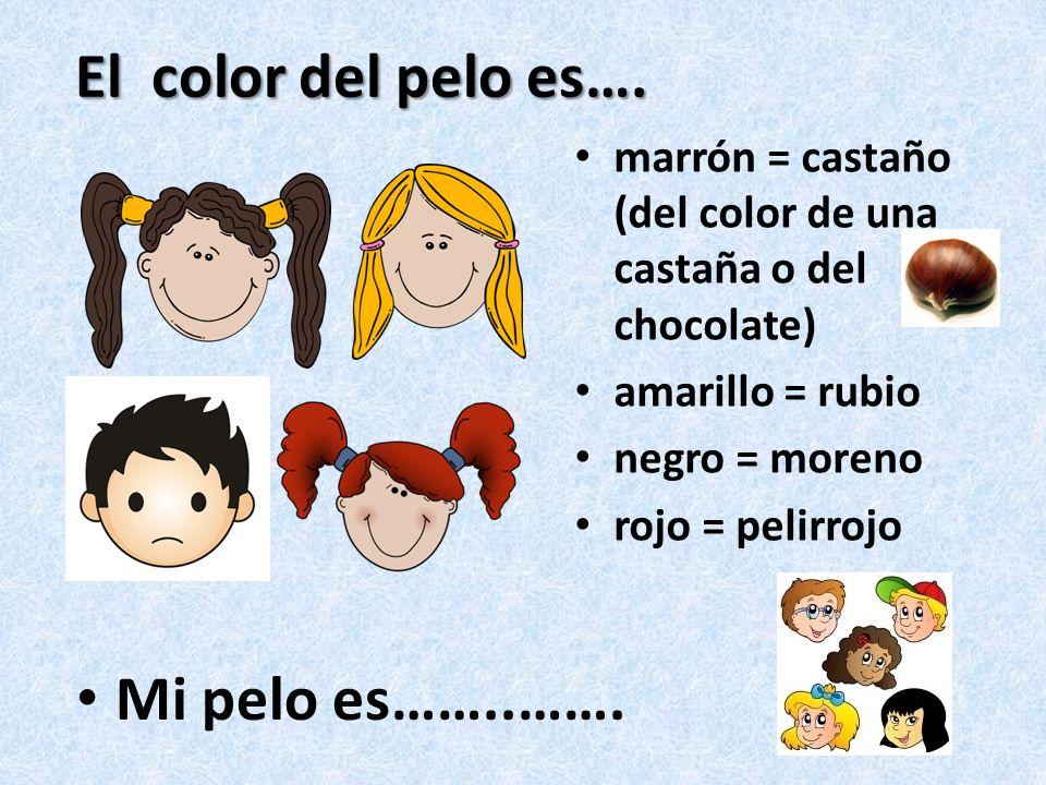 El color del pelo es….