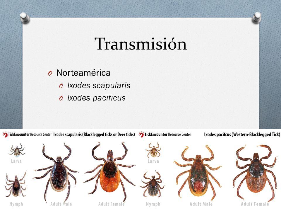 Transmisión O Europa, Asia y África O Ixodes persulcatus O Ixodes ricinus