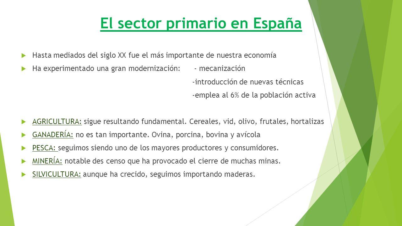 El sector primario en España  Hasta mediados del siglo XX fue el más importante de nuestra economía  Ha experimentado una gran modernización: - mecanización -introducción de nuevas técnicas -emplea al 6% de la población activa  AGRICULTURA: sigue resultando fundamental.