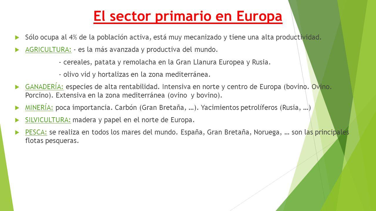 El sector primario en Europa  Sólo ocupa al 4% de la población activa, está muy mecanizado y tiene una alta productividad.