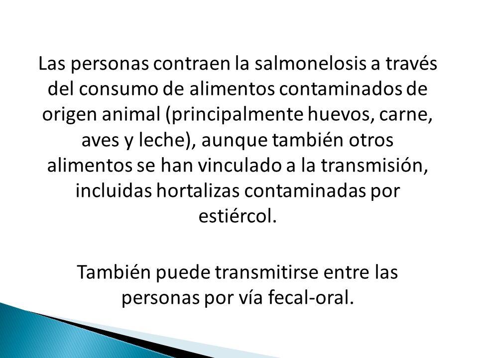 Las personas contraen la salmonelosis a través del consumo de alimentos contaminados de origen animal (principalmente huevos, carne, aves y leche), aunque también otros alimentos se han vinculado a la transmisión, incluidas hortalizas contaminadas por estiércol.