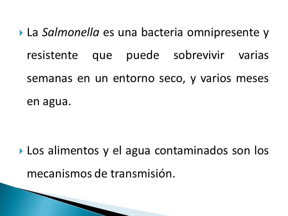  La Salmonella es una bacteria omnipresente y resistente que puede sobrevivir varias semanas en un entorno seco, y varios meses en agua.