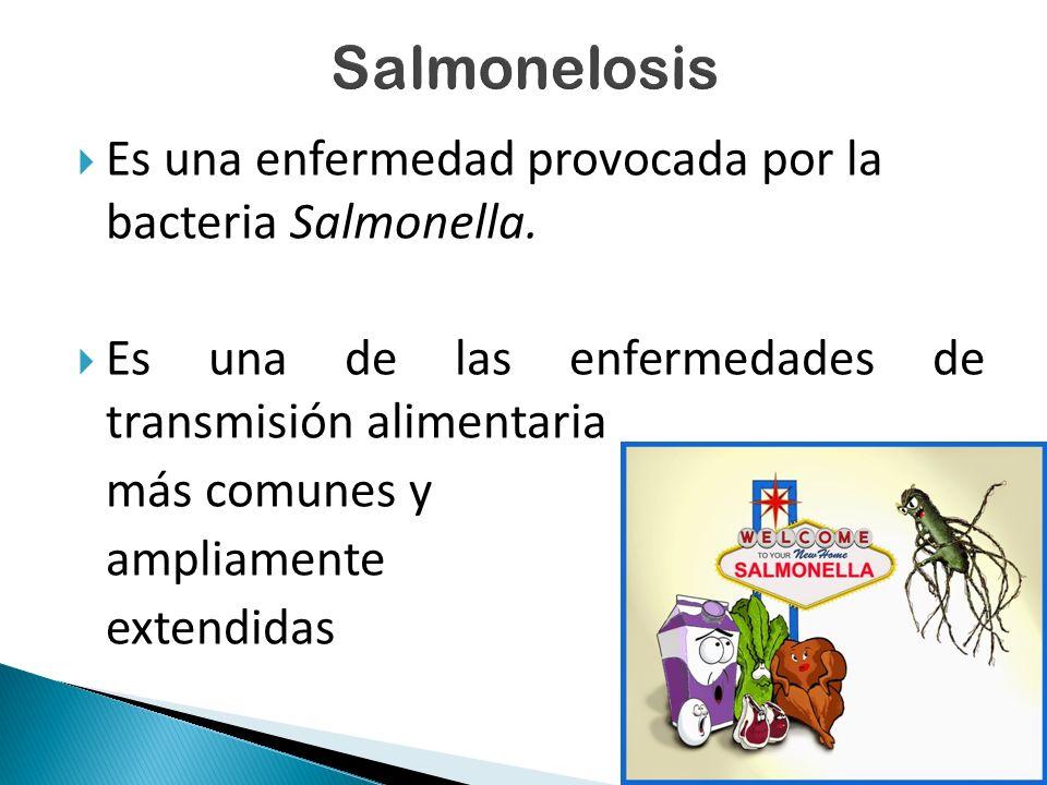  Es una enfermedad provocada por la bacteria Salmonella.