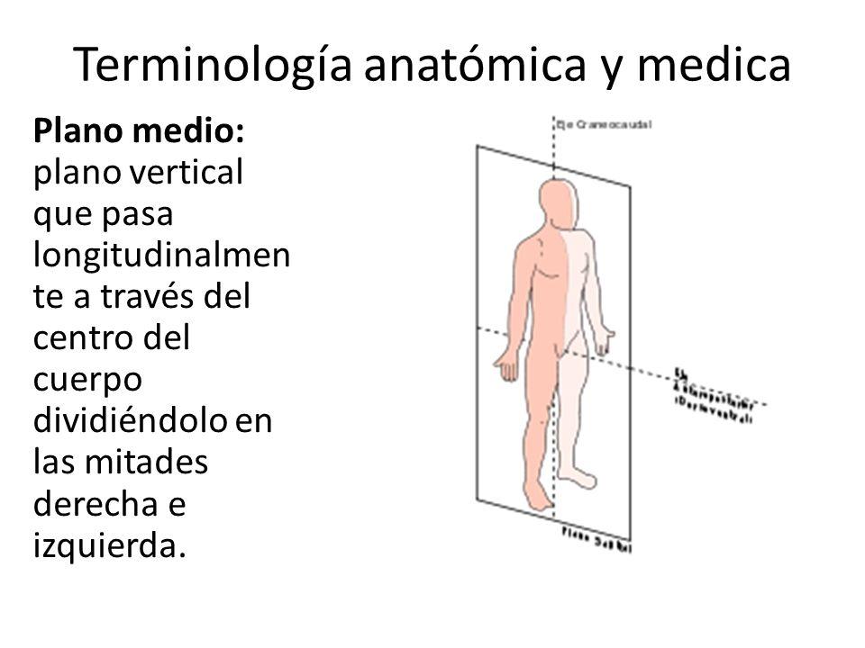 Terminología anatómica y medica Plano medio: plano vertical que pasa longitudinalmen te a través del centro del cuerpo dividiéndolo en las mitades derecha e izquierda.