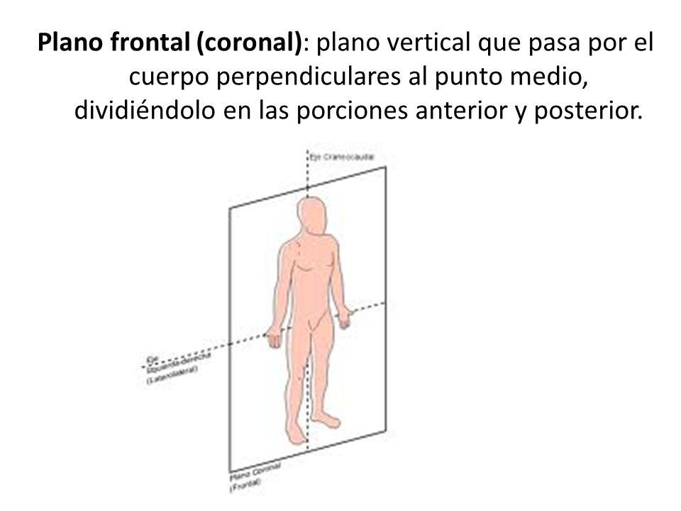 Plano frontal (coronal): plano vertical que pasa por el cuerpo perpendiculares al punto medio, dividiéndolo en las porciones anterior y posterior.