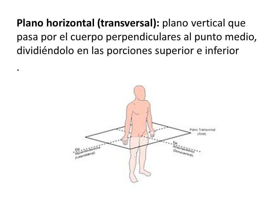 Plano horizontal (transversal): plano vertical que pasa por el cuerpo perpendiculares al punto medio, dividiéndolo en las porciones superior e inferior.