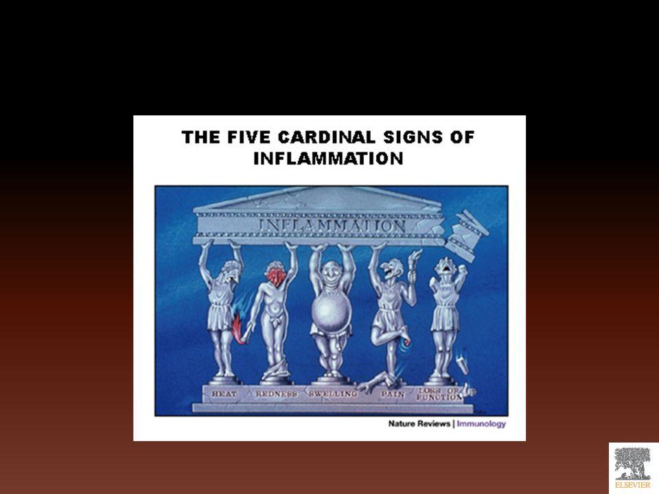 Inflamación aguda Tres componentes: Alteraciones en el calibre vascular( Aumenta el flujo de sangre) Cambios estructurales de los microvasos-exudado inflamatorio Migración de leucocitos-acúmulo en zona de lesión