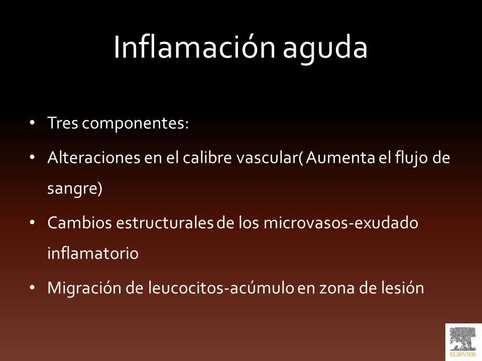 Patrones de inflamación aguda Inflamación fibrinosa: -mayor aumento de la permeabilidad vascular Exudado con más fibrinógeno Perdicarditis fibrinosa o pleuritis Cicatriz fibrosa.