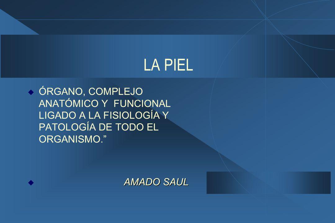 LA PIEL  ÓRGANO, COMPLEJO ANATÓMICO Y FUNCIONAL LIGADO A LA FISIOLOGÍA Y PATOLOGÍA DE TODO EL ORGANISMO. AMADO SAUL  AMADO SAUL