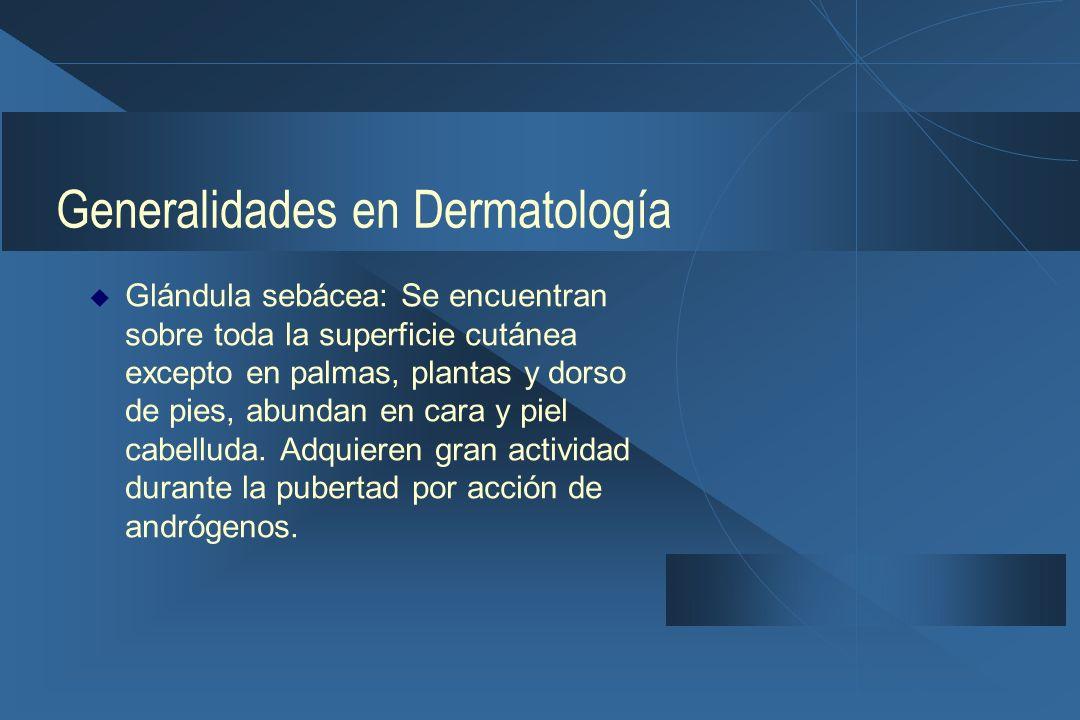 Generalidades en Dermatología  Glándula sebácea: Se encuentran sobre toda la superficie cutánea excepto en palmas, plantas y dorso de pies, abundan en cara y piel cabelluda.