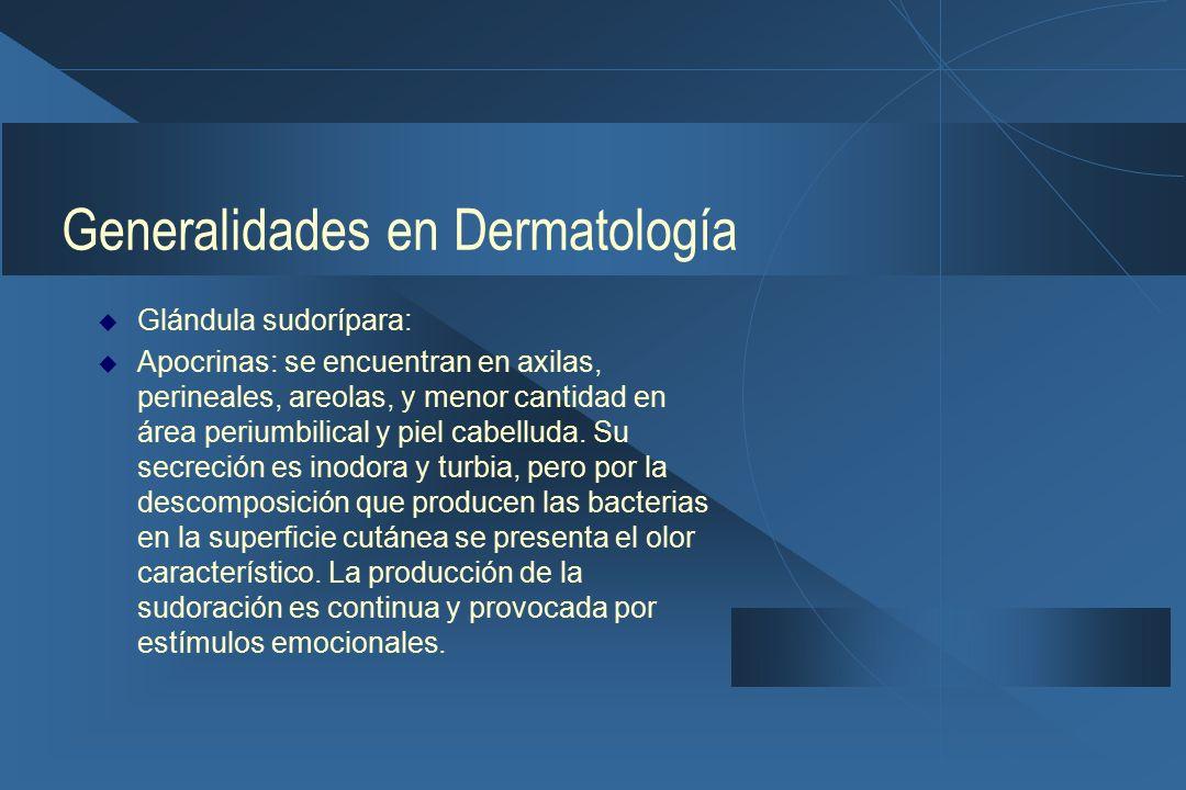 Generalidades en Dermatología  Glándula sudorípara:  Apocrinas: se encuentran en axilas, perineales, areolas, y menor cantidad en área periumbilical y piel cabelluda.