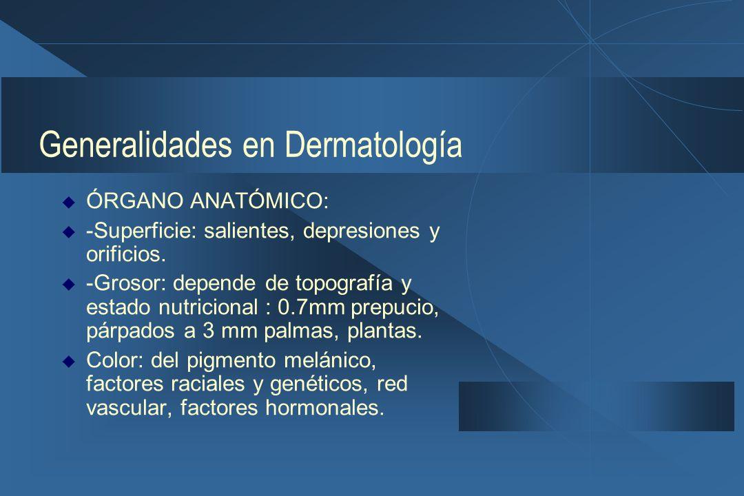 Generalidades en Dermatología  Glándula ecrina: Tiene como función la termorregulación, es excretora y secretora, el sudor es una solución electrolítica :cloruro sódico, potasio y bicarbonato.