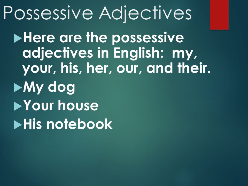 Possessive Adjectives  Here are the possessive adjectives in English: my, your, his, her, our, and their.