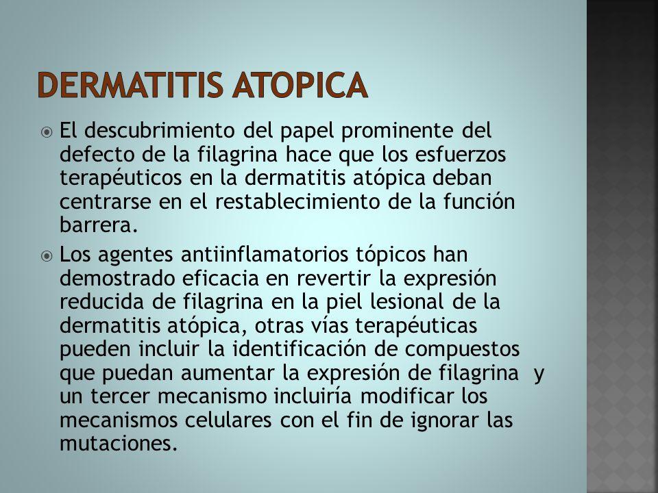  El descubrimiento del papel prominente del defecto de la filagrina hace que los esfuerzos terapéuticos en la dermatitis atópica deban centrarse en e