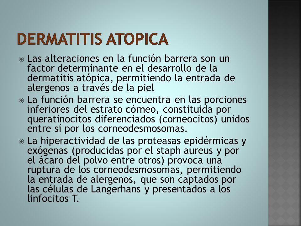  Las alteraciones en la función barrera son un factor determinante en el desarrollo de la dermatitis atópica, permitiendo la entrada de alergenos a t